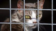 """Bien-être animal: un amendement voulant classer le chat comme une espèce """"nuisible"""" jugé irrecevable"""