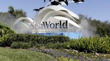 SeaWorld: 1Q Earnings Snapshot