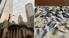 Tragic reason hundreds of birds found dead next to luxury hotel