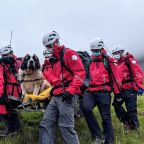 Mountain rescuers heft ailing St. Bernard off English peak
