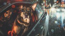 Perros policía lanzan tierno calendario 2019 por una buena causa