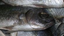 Comer pescado, ¿sí o no?