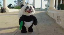 Adorable 'panda puppy' gets deal on 'Shark Tank'