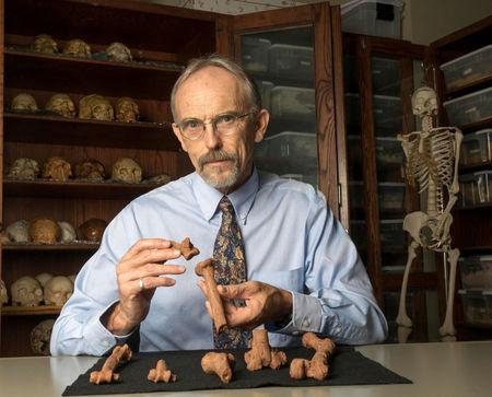 Paleoanthropologist John Kappelman is seen with 3D printouts of Lucy's skeleton illustrating the compressive fractures in her right humerus that she suffered at the time of her death 3.18 million years ago in this image from the University of Texas at Austin, U.S. for release on November, 30, 2016. Courtesy Marsha Miller/The University of Texas at Austin/Handout via REUTERS