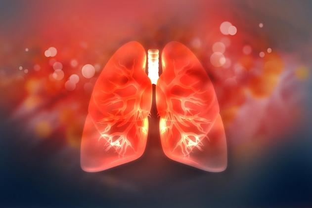 Researchers create lung 'blueprint' that could aid organ regeneration
