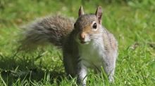 Tim Dowling: the squirrel has contravened social distancing guidelines