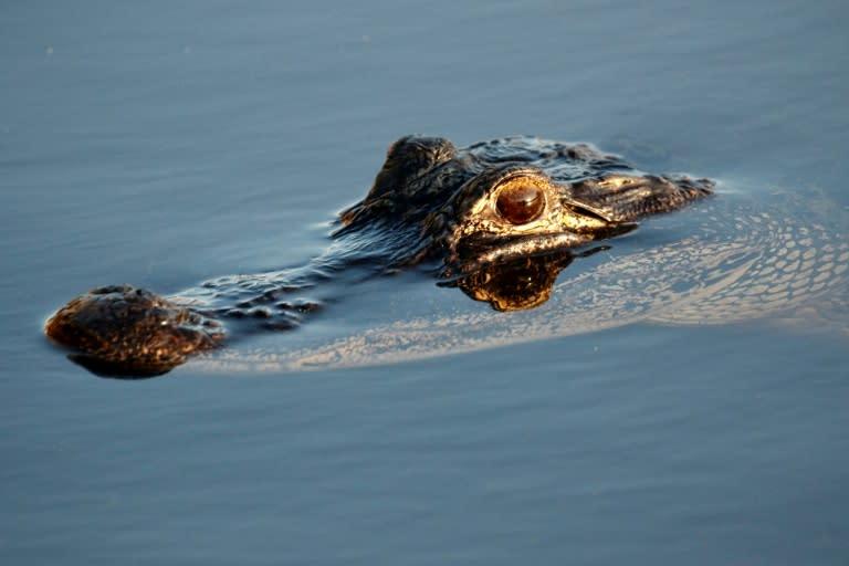 """Beware the """"meth-gators,"""" US police warned"""