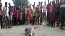 Viral pics: Python swallows goat in UP village; rescued by Forest Department