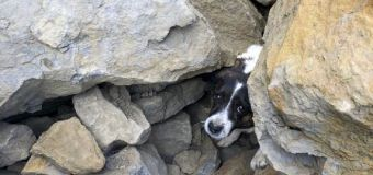 Missing dog found trapped under rocks