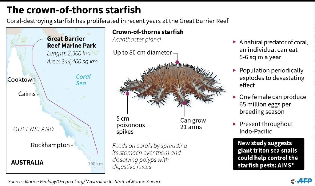Factfile on a predatory starfish that is causing devastating damage on Australia's Great Barrier Reef. (AFP Photo/AFP )