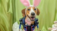 Meet Lieutenant Dan! Cadbury names two-legged dog the face of its new candy commercial
