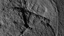 Prähistorischer Pfeilschwanzkrebs nach Darth Vader benannt