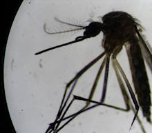 Michigan residents urged to stay indoors as scientists race to deal with threat of rare mosquito-borne disease