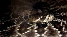 Boston ScientificPuts Snake Venom Unit Up for Sale