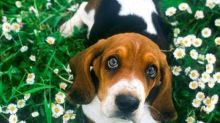 21 Ways to Keep Your Pets Safe All Summer