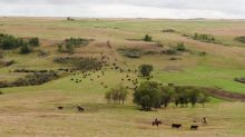 Ranchers in parched U.S. Northern Plains welcome hay lottery