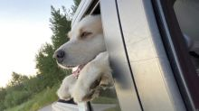 Jasper the dog gets his Hollywood ending after crossing B.C.'s Columbia River 3 times