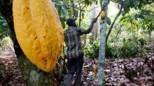 Côte d'Ivoire: la police au secours d'enfants employés illégalement dans la filière cacao