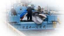 Japanese whaling: Cultural or cruel?