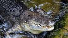 Crocodile attacks snorkeller off Australian island