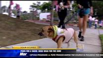 Paws for a cause: Dogs walk for the cure