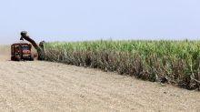Usina Coruripe eleva produção de açúcar e moagem no 1º tri; lucro operacional dispara