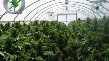 These Marijuana Stocks Are Outselling Tilray