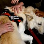 Therapy dogs sighted on Capitol Hill amid 1st public impeachment hearing