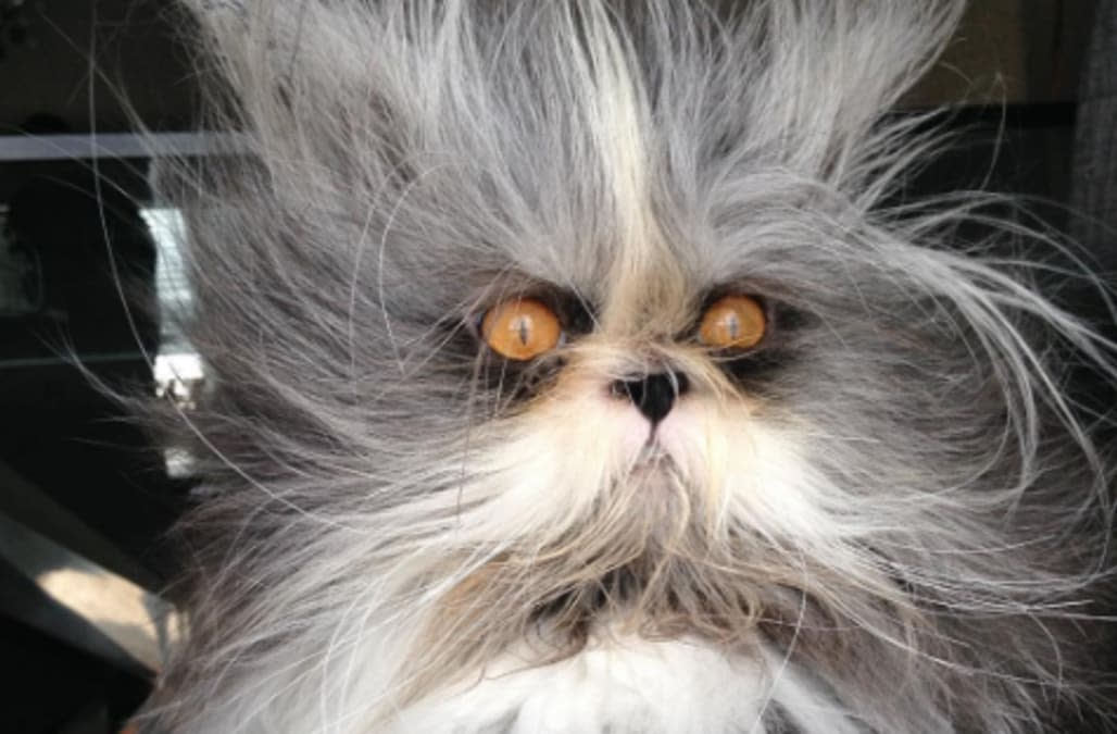 This cat is having a crazier hair day than you -- and he's scarily adorable