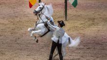 Los caballos domésticos no se habrían originado en Anatolia
