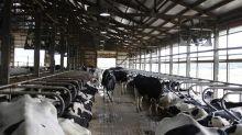 Fonterra ups farmgate milk price forecast