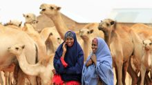 Camel milk could be the next superfood—thanks to East Africa