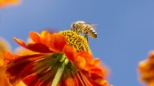 Plant a pollinator-friendly garden this spring: 5 things to know