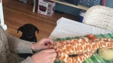 Dog patiently waits for beloved toy to be repaired