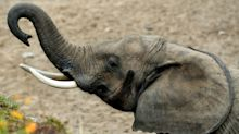 These 3 well-known retailers are paying elephant-sized dividends