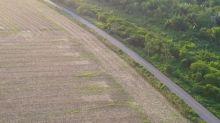 Deforestación récord en la Amazonía en el primer semestre de 2020