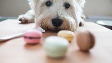 12 tips para mantener a tu mascota sana y salva en este Día de Brujas