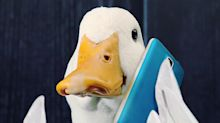 Everything's Just Ducky at Aflac