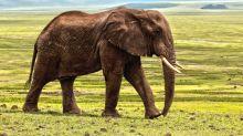Warren Buffett and the Problem with Elephants