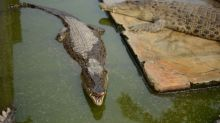 A Woman Was Mauled to Death by a Pet Crocodile in Indonesia