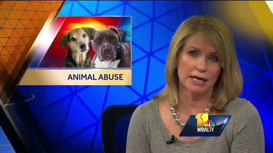 Former Anti-Animal Abuse Commission members speak out