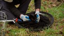 'Treetop Cat Rescue': The Cat's in the Bag!
