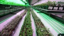 Cannabis producer Organigram Holdings Inc. reports $10.2M third-quarter loss