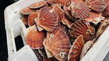 Pêcheurs anglais et français trouvent un accord sur la coquille Saint-Jacques