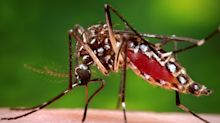 Dengue cases in 2019 already surpass total cases in 2018: NEA statistics