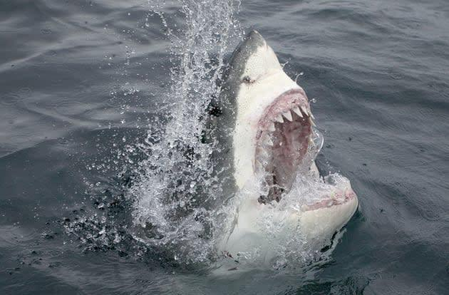 Not even a sharknado will stop Google's conquest of the undersea internet