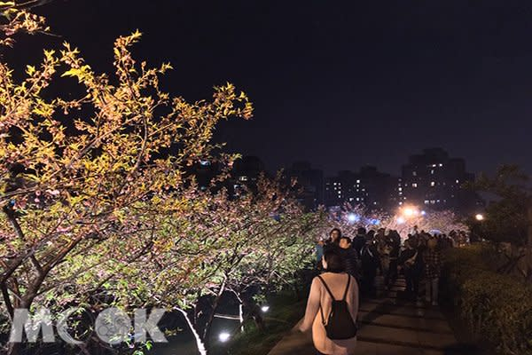 樂活公園夜櫻之美 (圖片提供/chrisalmighty1234)