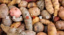 活出健康:誤會了發芽薯仔?