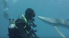 No te creerás lo que este tiburón le hizo en la cara a este buzo