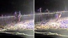 Deer Gets Stuck Trying to Hop Cemetery Fence, Rescued By Police